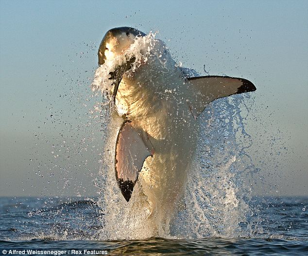 Mick Fanning and the shark attack Featured Image