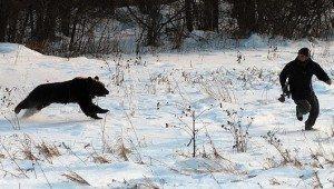 bear_attack_01