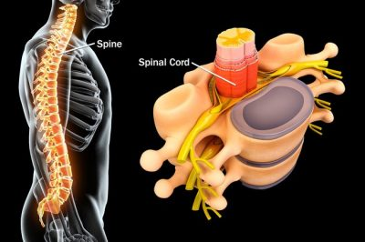 Guest blog:  how chiropractic care can change your life Featured Image